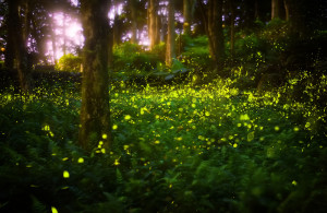 Die Natur macht es vor: Das Licht von Glühwürmchen zeichnet sich durch einen extrem hohen Wirkungsgrad aus