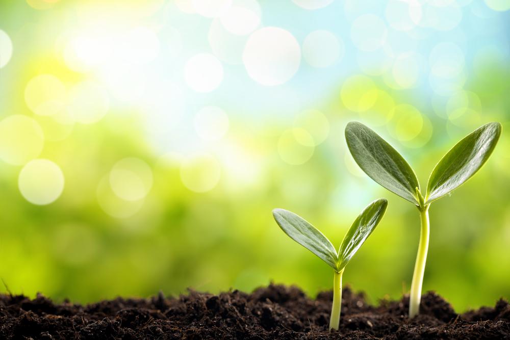 Mit geeigneten LED-Lampen wachsen Pflanzen besser