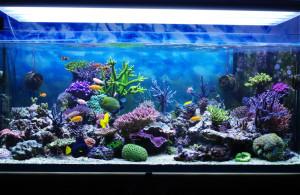 Nur mit dem richtigen Licht gedeihen Tiere und Pflanzen in Aquarien und Terrarien