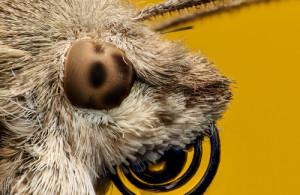 Die Augen des Kolibrifalters