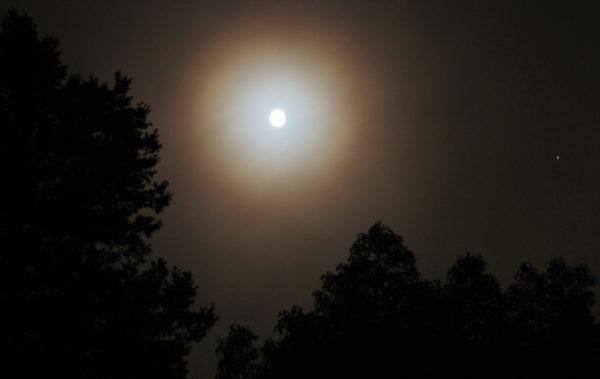 Mond Licht Mücken