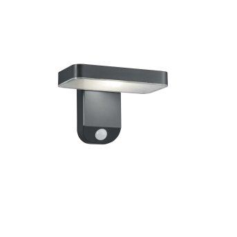 Reality Esquel Solar-Außenwandleuchte LED Anthrazit, 1-flammig, Bewegungsmelder